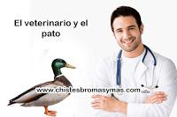 """Una mujer acude al veterinario con un pato muy débil. El veterinario saca su estetoscopio y escucha el pecho del ave. Después de un par de segundos, el veterinario sacude la cabeza con tristeza y dice: """"Lo siento pero el pato ha dejado de existir."""""""