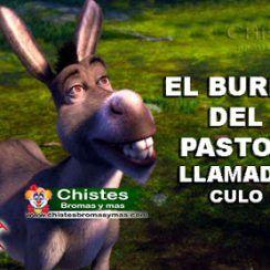 El burro del pastor llamado Culo - Chistes de animales